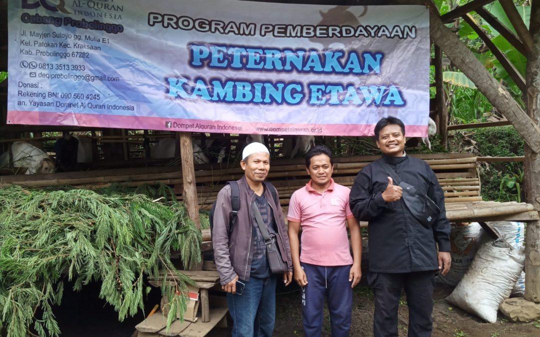 Pemberdayaan Ternak Kambing Etawa, Wujud 'Economy Care' DQ Probolinggo
