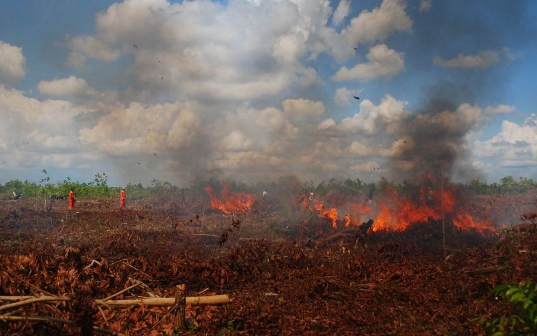 Dompet Alquran Indonesia Serahkan Bantuan Bencana Karhutla